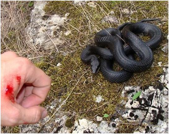 Біля підніжжя Говерли змія покусала 16-річного туриста з Кропивницького